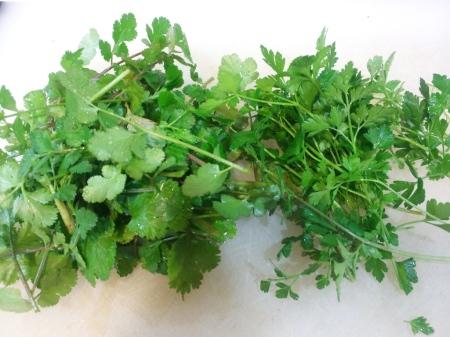 cilantro and parsley 1