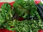 Cilantro, arugula, and greens